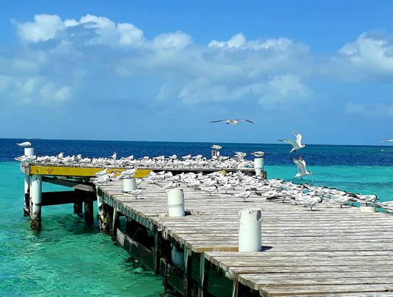 Goff's Caye Special - Snorkel Tours - Anda De Wata - Tropical Island - Belize