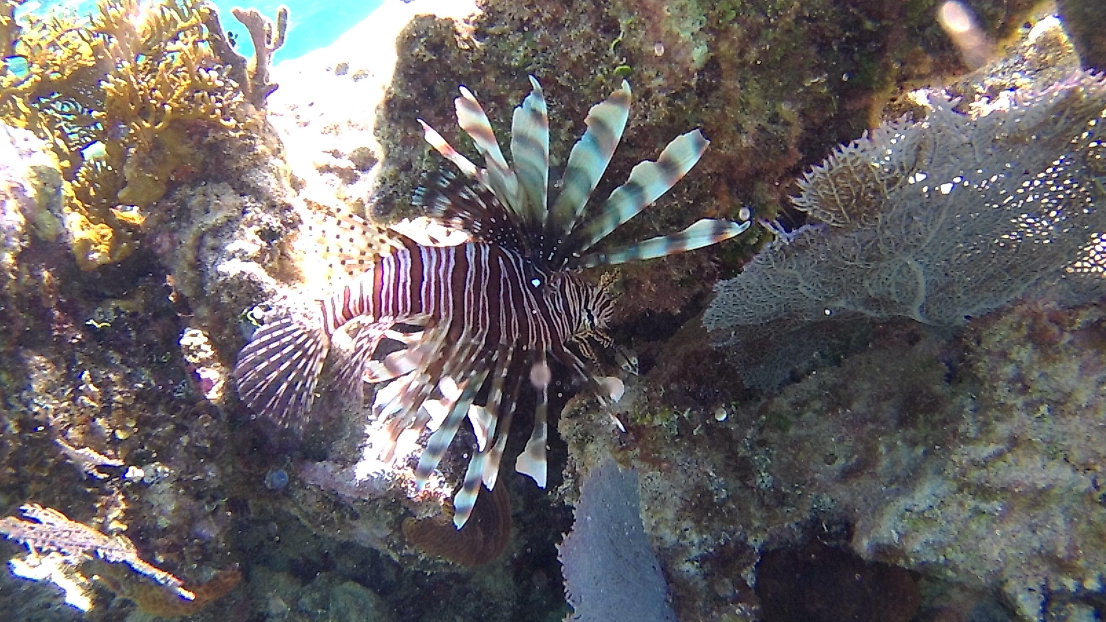 Marine species - Snorkel Tours - Anda De Wata Tours - Belize