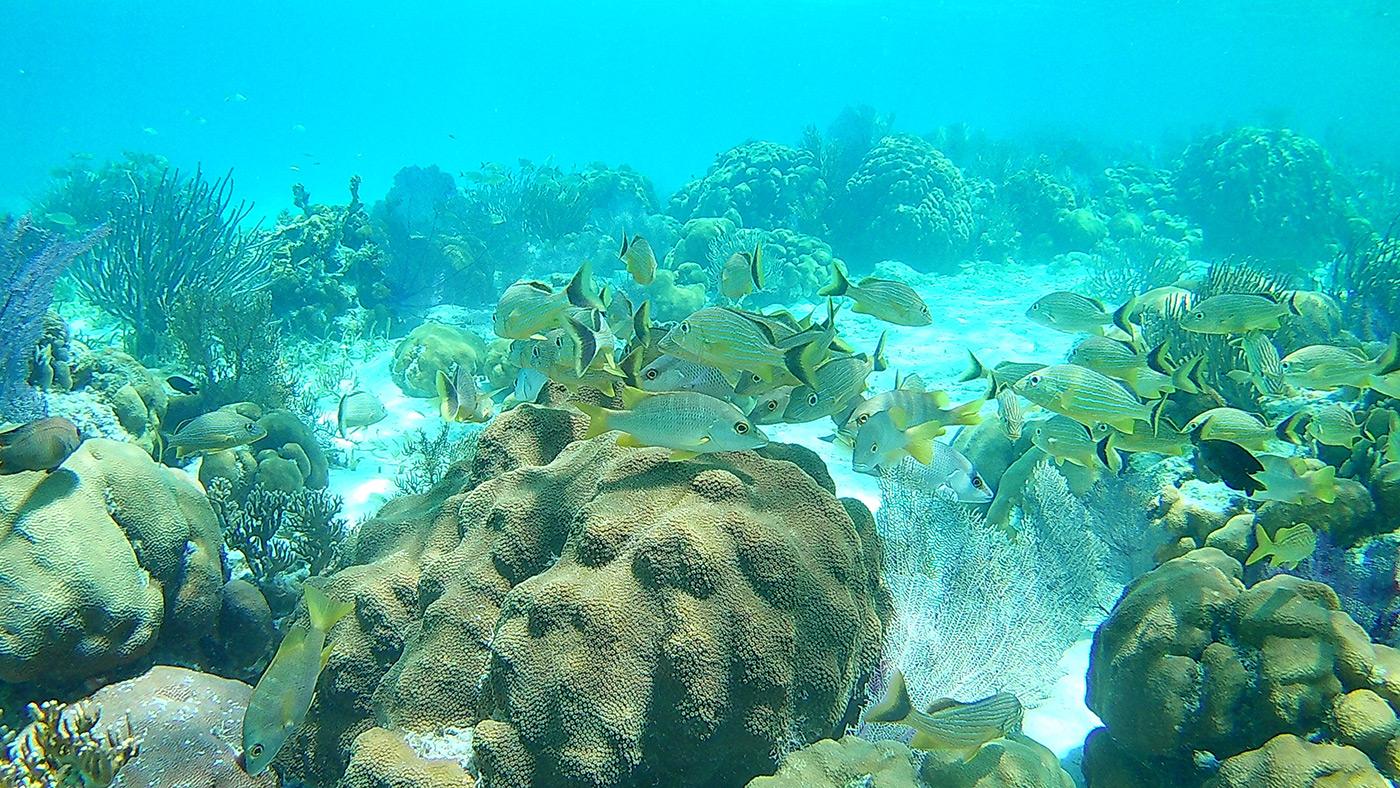 Marine Species - Belize - Coral Gardens - Barrier Reef - Anda De Wata Tours
