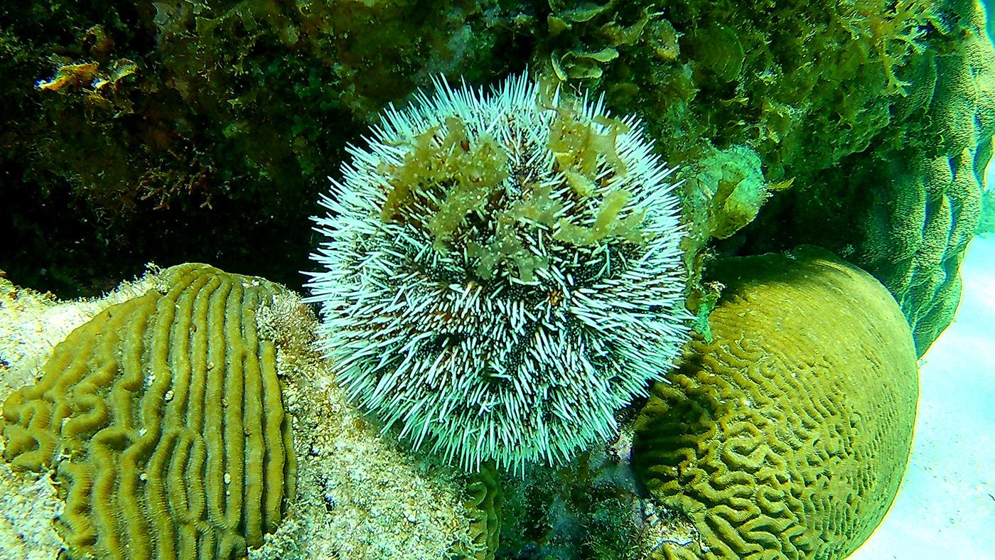 Coral Gardens - Barrier Reef - Snorkel Tours - Anda De Wata Tours - Belize