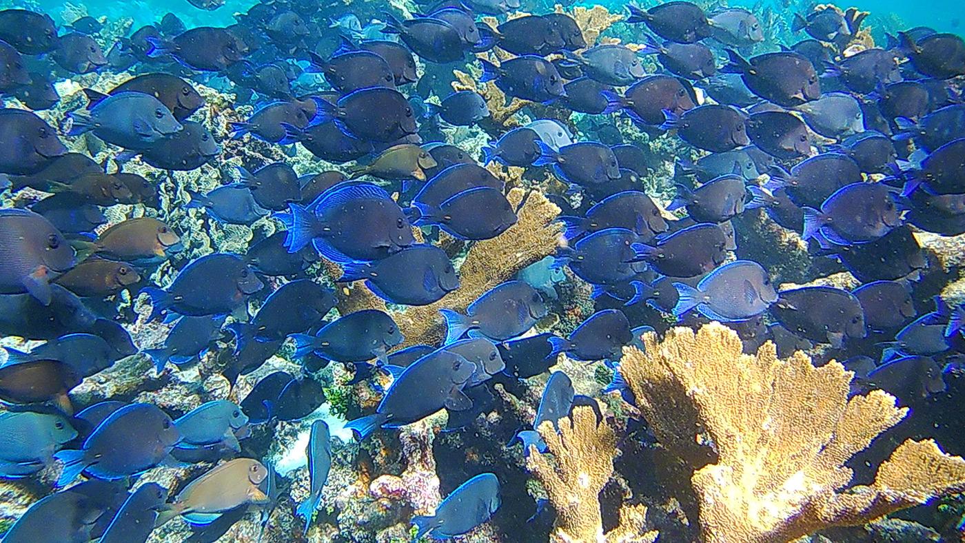 Anda De Wata Tours - Marine Species - Belize - Coral Gardens - Barrier Reef