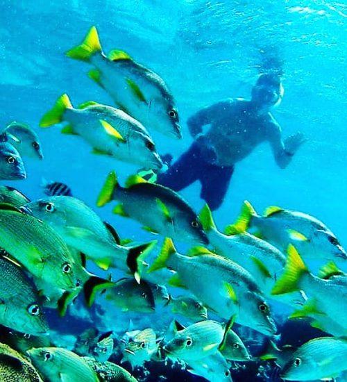 Anda De Wata Tours - Snorkel Tours - Snorkeling - Belize