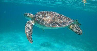 Anda De Wata - Snorkeling Tours - Hol Chan Marine Reserve - Belize