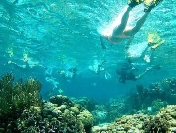 Caye Caulker Marine Reserve - Snorkel Tours - Anda De Wata - Snorkel Coral Gardens - Snorkel Belizes Barrier Reef