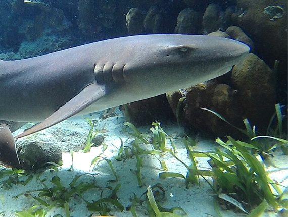 Caye Caulker Marine Reserve - Snorkel Tours - Anda De Wata - Shark & Sting Ray Alley