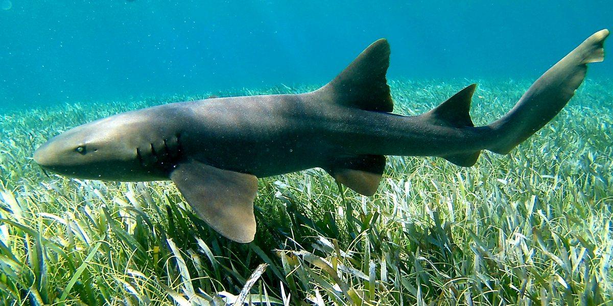 Caye Caulker Marine Reserve - Snorkel Tours - Anda De Wata - Shark & Sting Ray Alley - Snorkel Belizes Barrier Reef