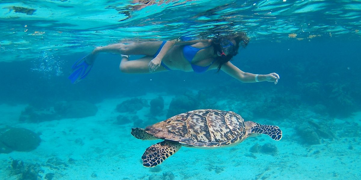 Hol Chan Marine Reserve - Snorkel Tours - Anda De Wata - Snorkel with sea Turtles - Sharks and Sting Rays - Ambergris Caye island - Barrier Reef