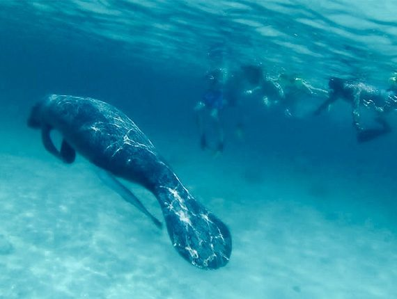 Manatee Tour - Snorkel Tours - Anda De Wata - Enjoy two killer snorkel stops along Belizes Barrier Reef